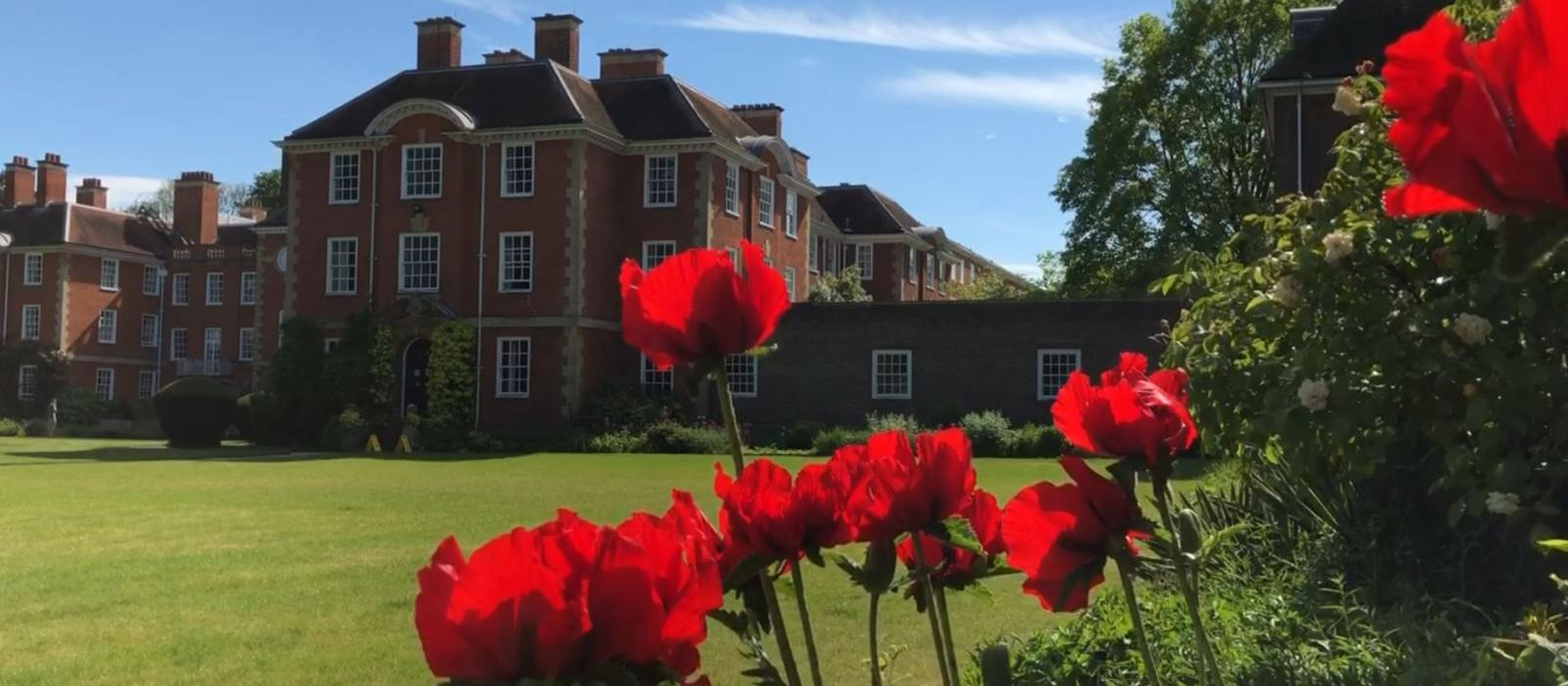 LMH poppies taken by the SCR lawn with a view of buildings